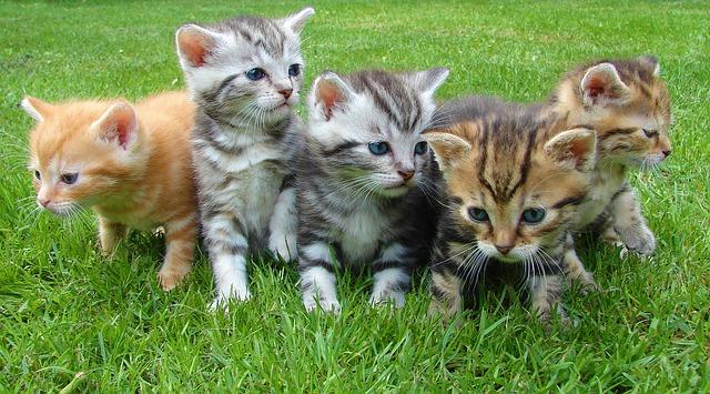 Gatto360 - Nomi per Gatti