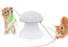 Laser per gatti gioco utile o dannoso